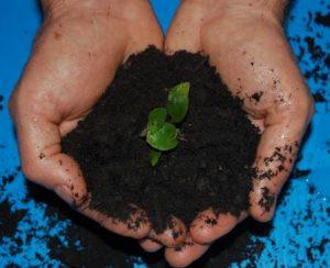 compost new england