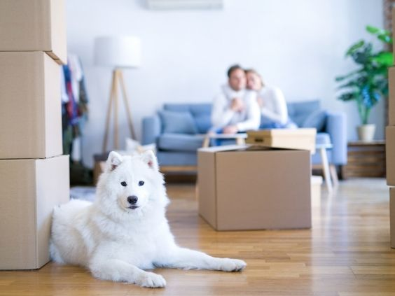 Moving Day Tips for Dog Owners