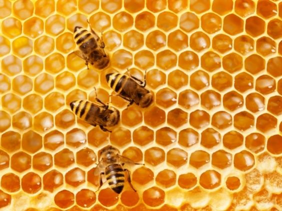 Tips for Safely Removing a Beehive from Your Garden