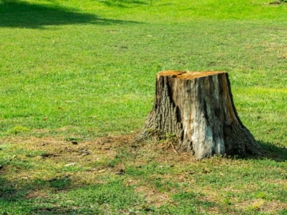 Why You Need To Get Rid of That Tree Stump